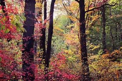 Photograph - Festive Foliage by Jessica Jenney