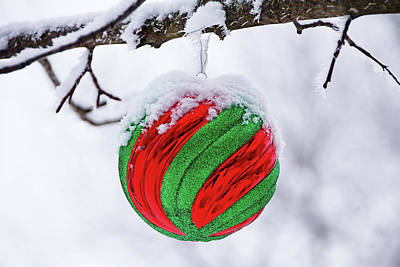 Photograph - Festive Red And Green by Debbie Oppermann