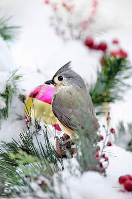 Titmouse Photograph - Festive Titmouse Bird by Christina Rollo