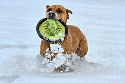 Photograph - Fetching The Frisbee by Adam Jewell