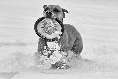 Photograph - Fetching The Frisbee Black And White by Adam Jewell