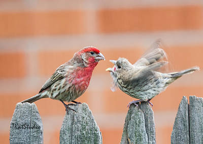 Photograph - Feuding Finches by Tim Kathka