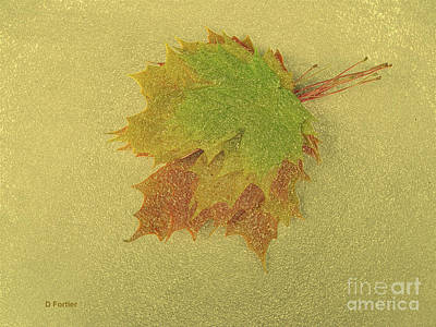 Maple Leaf Art Mixed Media - Feuilles D'automne II / Fall Leaves II by Dominique Fortier