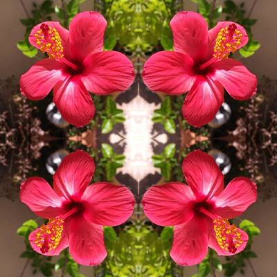 Photograph - Fez Flowers by Rick Frausto