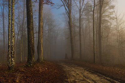 Photograph - Foggy Morning In The Forest by Ulrich Burkhalter