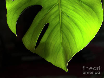 Photograph - Fhgreen by Mary Kobet