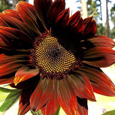 Photograph - Fibonacci Hues by Rasma Bertz