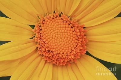 Wall Art - Photograph - Fibonacci Spiral by Tracy Farrand