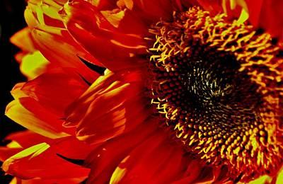 Fickle Sunflower Art Print