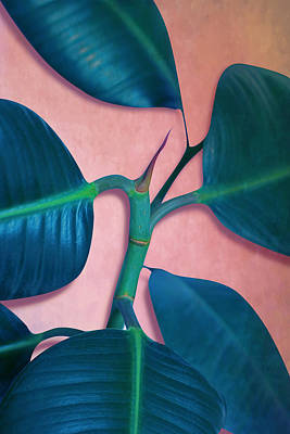 Nature Abstract Digital Art - Ficus Elastica by Mark Ashkenazi
