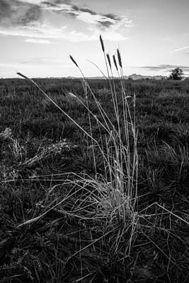 Photograph - Field by Aaron Spong