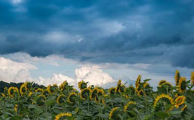 Photograph - Field And Sky by Joye Ardyn Durham