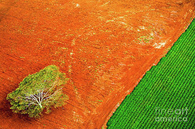 Photograph - Field And Tree by M G Whittingham