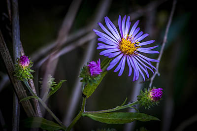 Florida Flowers Photograph - Field  Beauty by Marvin Spates