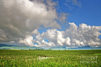 Photograph - Field by Charuhas Images