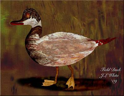 Field Duck Art Print by Jerry White