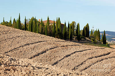 Field, Farm House Among Cypress Trees. Italy Print by Michal Bednarek