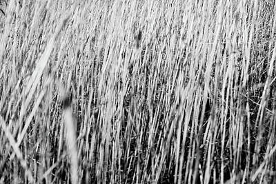 Photograph - Field Grasses by Trance Blackman