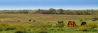 Photograph - Field Grazing by Melinda Ledsome
