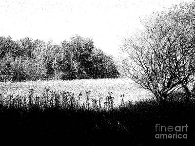 Field In Black And White Art Print by John  Bichler