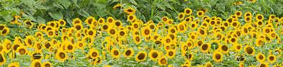 Photograph - Field In Bloom by Joye Ardyn Durham