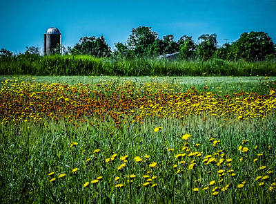 Photograph - Field In June by Terry Ann Morris