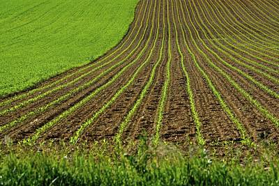 Photograph - Field Lines And Green by Tana Reiff