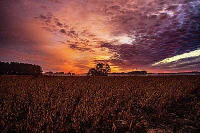 Photograph - Field Of Beans by John Harding