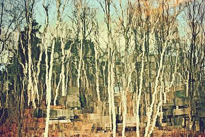 Photograph - Field Of Birch by Gillis Cone