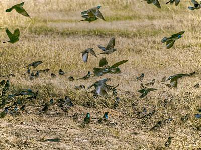 Photograph - Field Of Birds by Philip A Swiderski Jr
