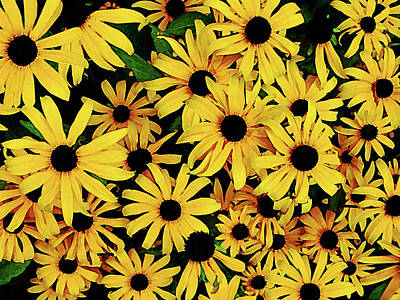 Photograph - Field Of Black-eyed Susans by Susan Savad