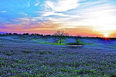 Photograph - Field Of Blue Lum by John Babis