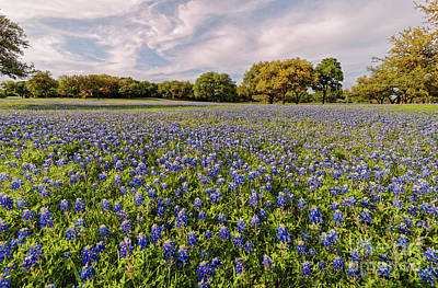 Photograph - Field Of Bluebonnets Caressed By The Afternoon Sun - San Marcos Texas Hill Country by Silvio Ligutti