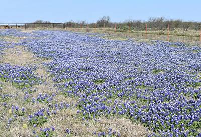 Photograph - Field Of Bluebonnets Texas by rd Erickson