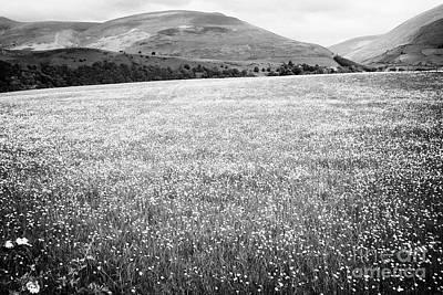 Crop Rotation Wall Art - Photograph - Field Of Buttercups Growing In Farmland Under Crop Rotation Underskiddaw Keswick Cumbria England Uk by Joe Fox