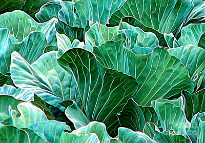 Photograph - Field Of Cabbages Expressionist Effect by Rose Santuci-Sofranko