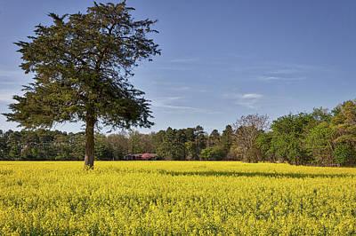 Photograph - Field Of Canola Flowers by Stuart Litoff