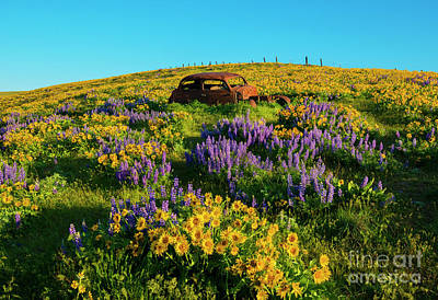 Photograph - Field Of Color by Mike Dawson