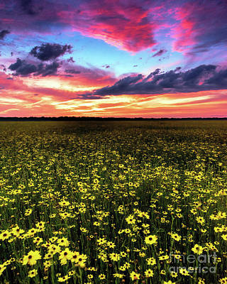 Photograph - Field Of Colors by Damon Powers
