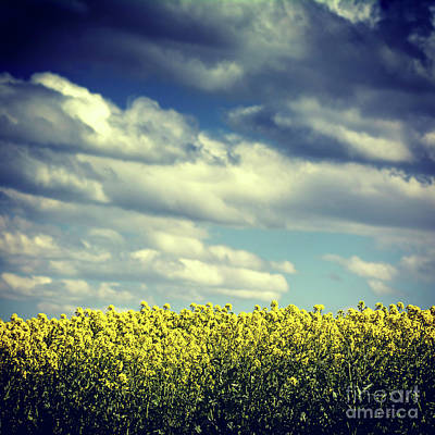 Field Of Colza. Auvergne. France Art Print