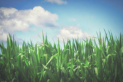 Photograph - Field Of Corn by Bob Orsillo