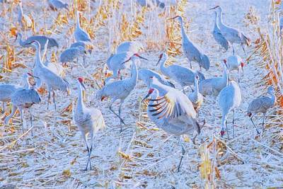 Photograph - Field Of Cranes, Sandhills by Flying Z Photography by Zayne Diamond