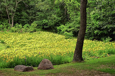 Photograph - Field Of Daffodils by Allen Beatty