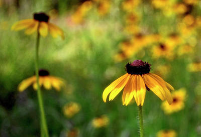 Photograph - Field Of Daisies 010 by George Bostian