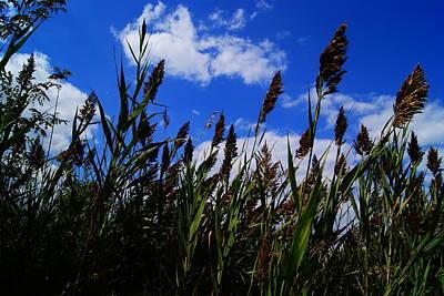 Field Of Dreams 2 Original