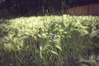 Photograph - Field Of Dreams by Cendrine Marrouat