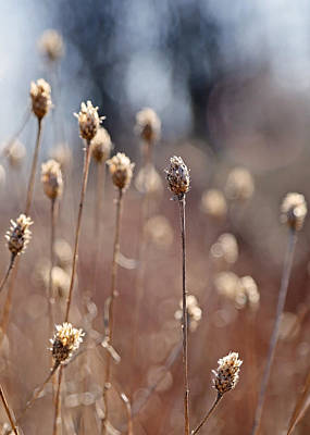 Fall Photograph - Field Of Dried Flowers In Earth Tones by Brooke T Ryan