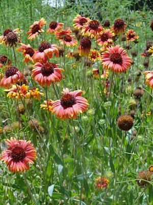 Photograph - Field Of Flower Eyes by Mozelle Beigel Martin