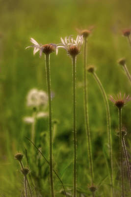 Photograph - Field Of Flowers 3 by Patricia Cale