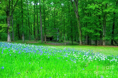 Photograph - Field Of Flowers And Log Cabin by David Arment